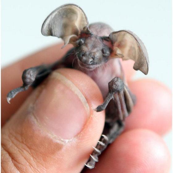 Мышка ушан