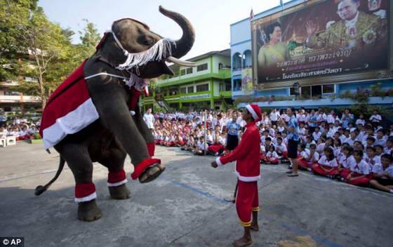 Шоу с участием слонов в костюме санта