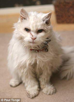 самая старая кошка
