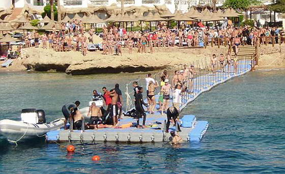 жертва акулы Египет