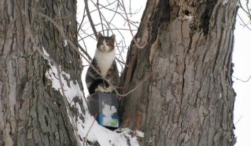 Кошка Алмонд