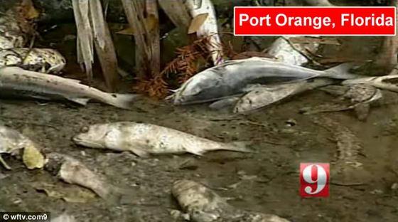 Мертвая рыба в Флориде