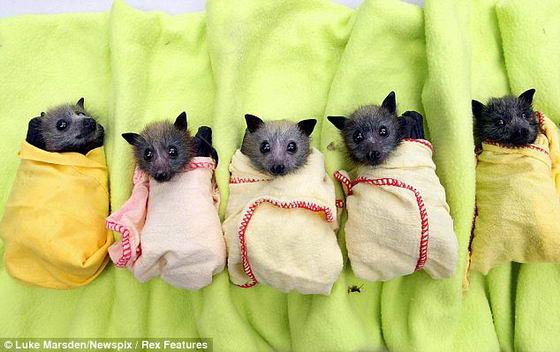 Маленькие мышки