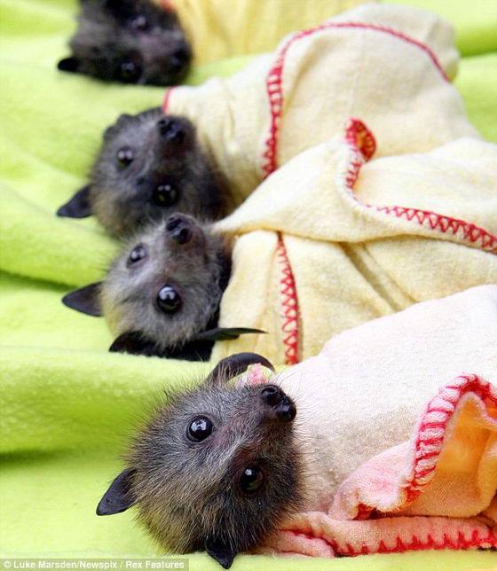 Спасенные мышки