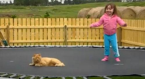 Кот на батуте