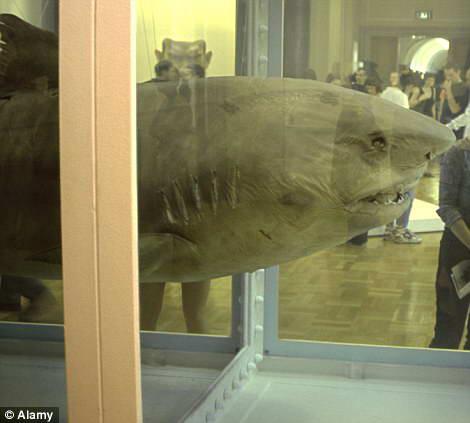 акула в формальдегиде