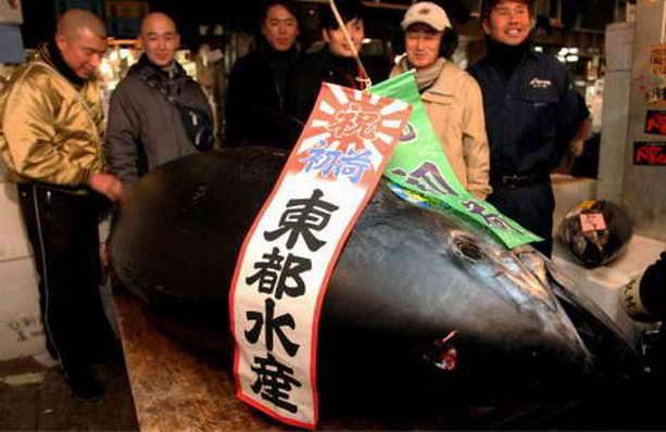 В Японии продали тунца за рекордные 396 тысяч долларов