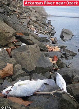 Мертвая рыба на берегу реки
