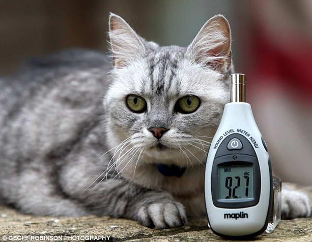 самый громкий кот в мире