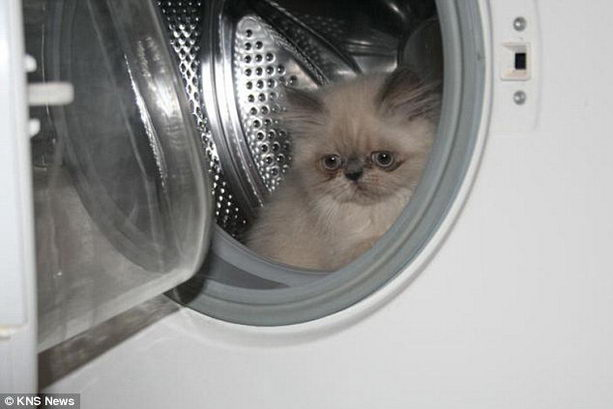 Ксюша в стиральной машинке