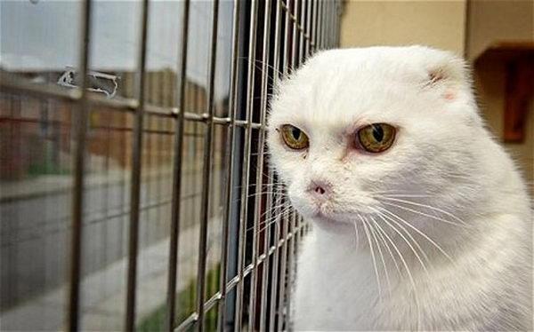 Самый уродливый кот