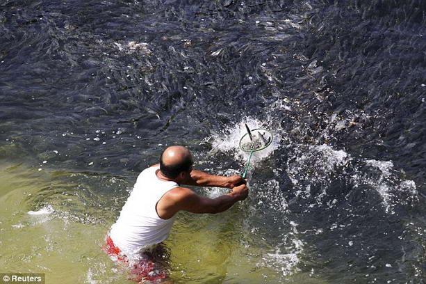 рыба в Акапулько