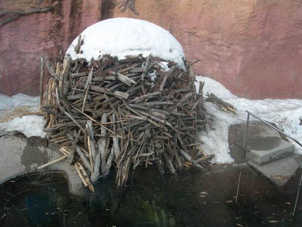 Дом бобров