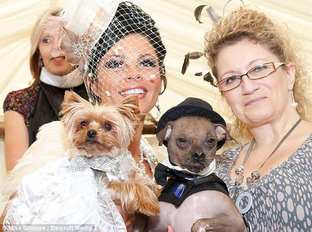 Самая дорогая свадьба собак