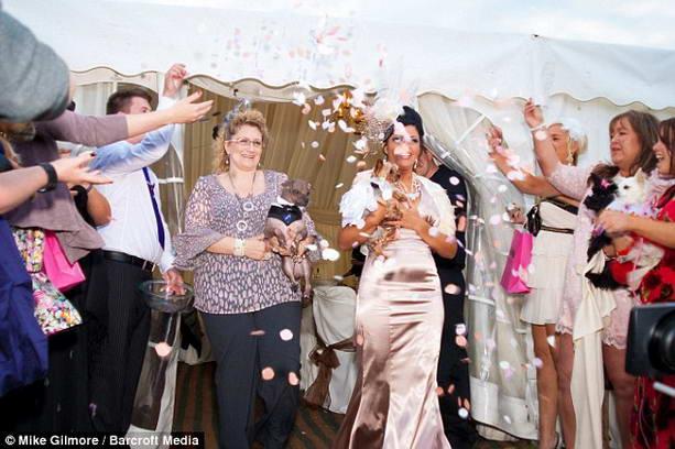 свадьба домашних животных