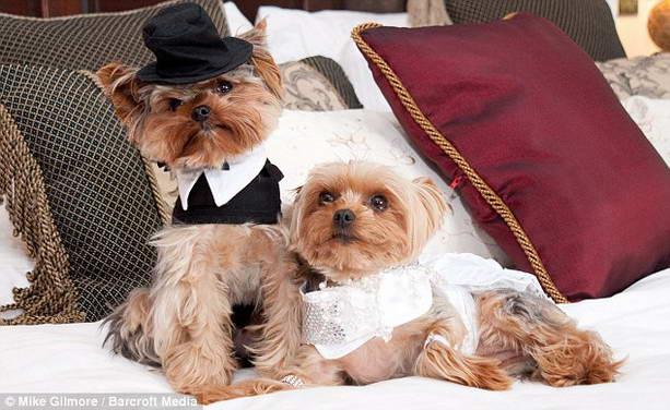 свадьба собак
