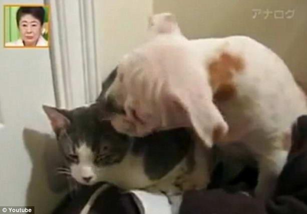 собака пристает к коту
