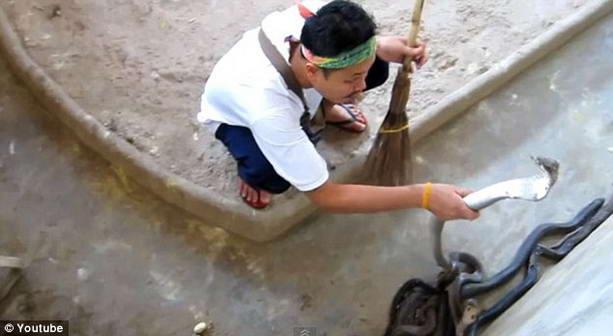уборщик за змеями