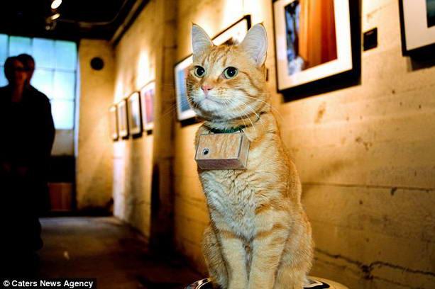 кошка Купер