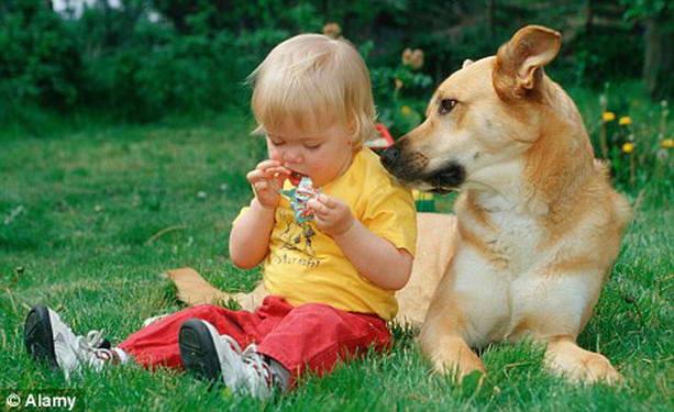 Как избавиться от аллергии — помочь могут домашние кот или собака