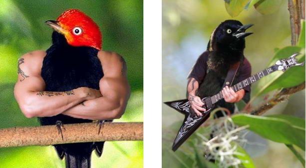 Птица качок и птичка рок звезда с