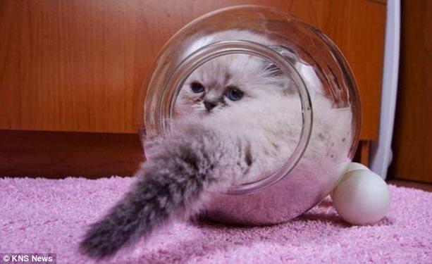 кошка в стеклянной банке
