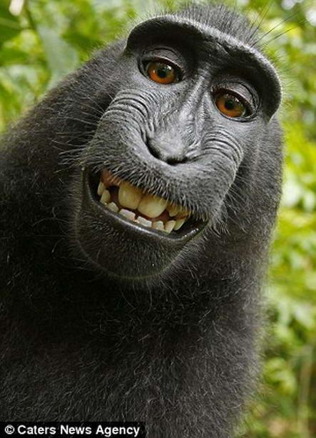 улыбающаяся обезьяна