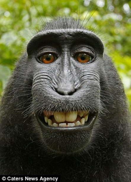 улыбающаяся макака