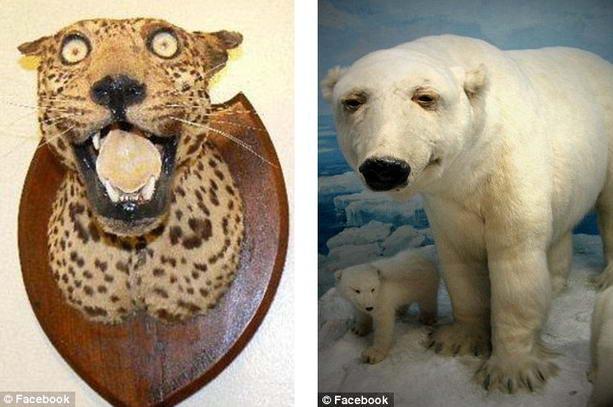 Леопард белый медведь