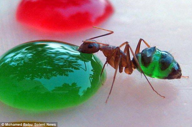 необычные муравьи