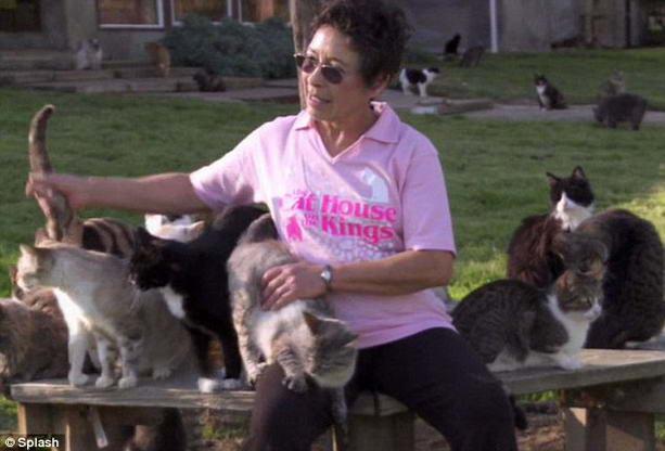 Рекордное количество котов оказалось у заботливой американки