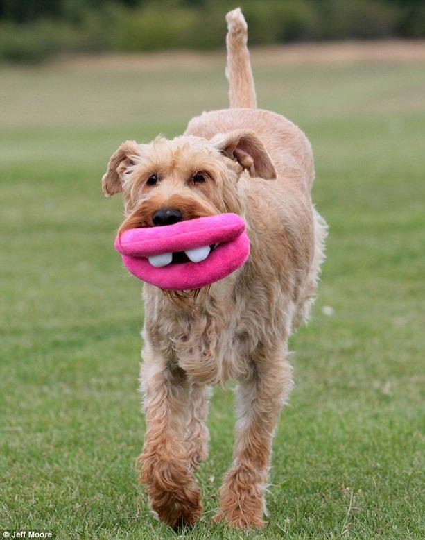 собака с огромными губами