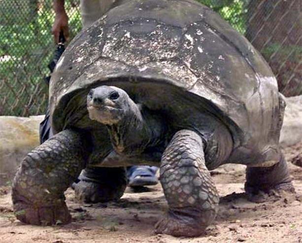 Старейшее животное в мире