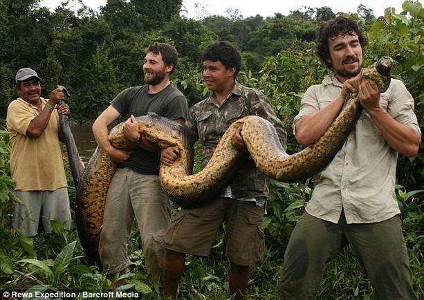Змея чудовищных размеров обнаружена в Бразилии, видео
