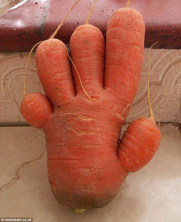 прикольная морковь