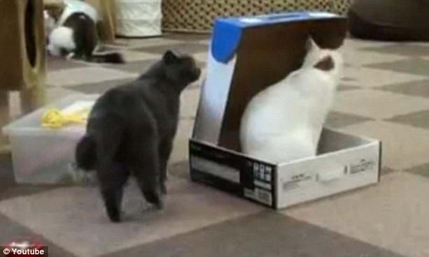 коты играются