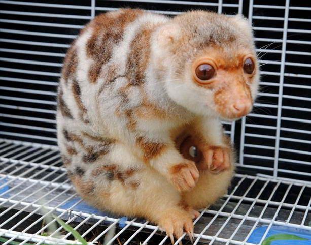 Каких животных самые большие глаза в