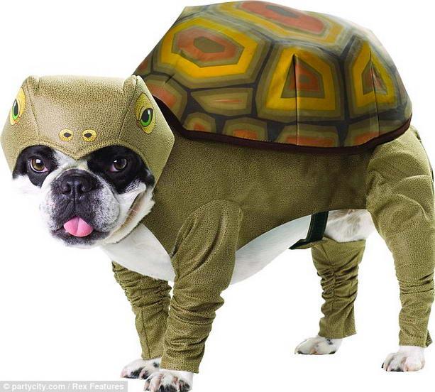 костюм черепахи для собак