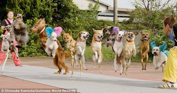 собаки в цирке Супер Ван Ван