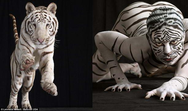 тигр боди-арт