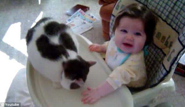 игривая кошка и малыш