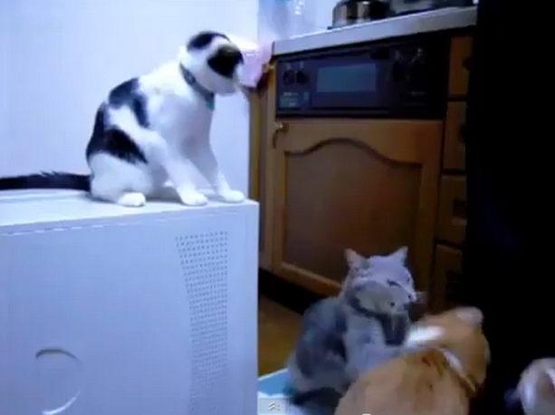 кот троллит