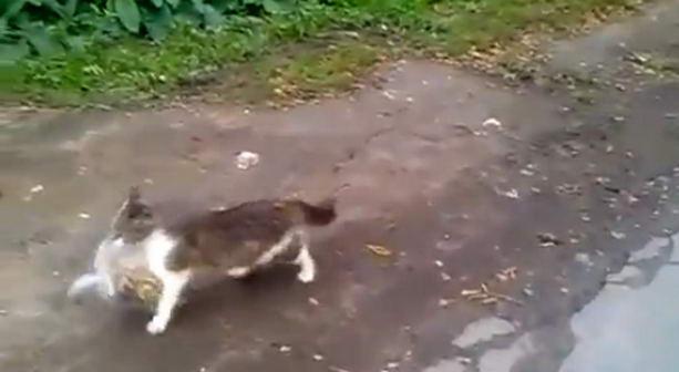 кошка с покупками
