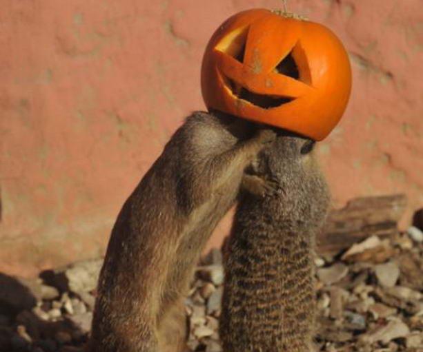 http://skuky.net/wp-content/uploads/2011/10/meerkats4.jpg