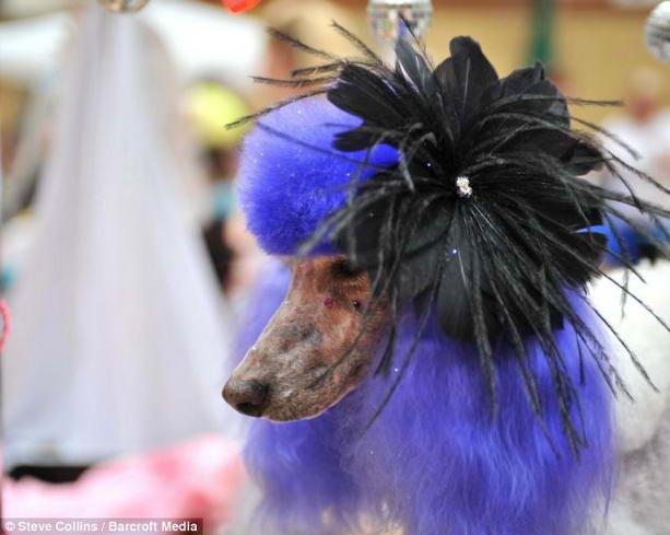 собака Леди Гага
