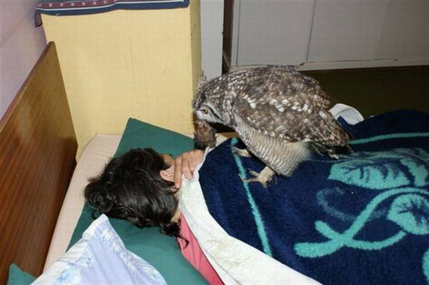Заботливая сова