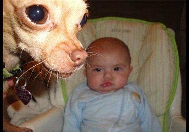 малыш и собака ребенок