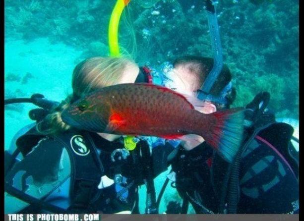 рыбка и аквалангисты