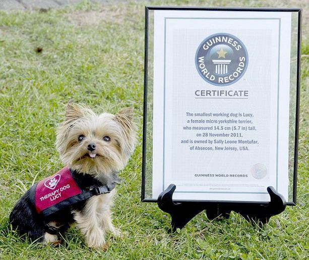 самая маленькая служебная собака в мире