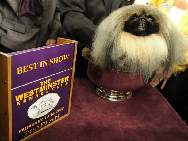 выставка Westminster Dog Show